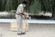 ببینید | تصاویری زیبا از لحظه رهاسازی آهوی ایرانی در کیش