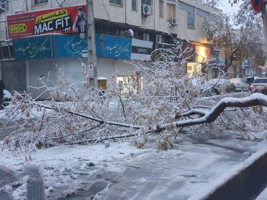 شکسته شدن ۵۰۰ شاخه درخت در برف پاییزی ارومیه