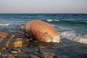 ببینید | مرگ دومین نهنگ در سواحل کیش
