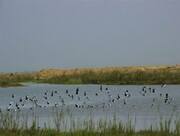 زیستگاه های طبیعی البرز از آنفلوآنزای فوق حاد پرندگان پاک هستند