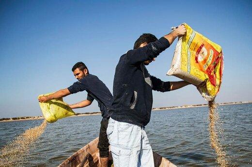 اولین مرحله دانه ریزی برای پرندگان مهاجر در تالاب هورالعظیم