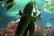 ببینید | رقص غواص استرالیایی با کوسه درون آکواریوم