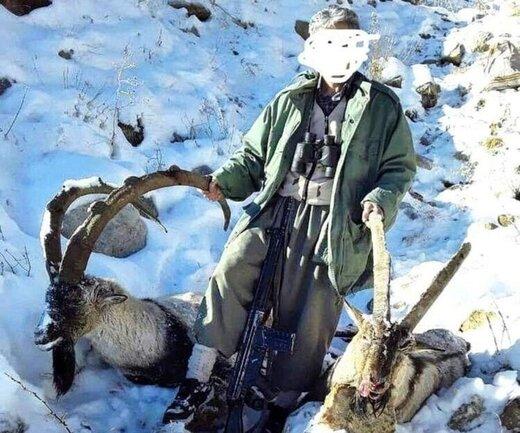 برخی افراد بیکار به خاطر گرانی گوشت، شکارچی شدهاند