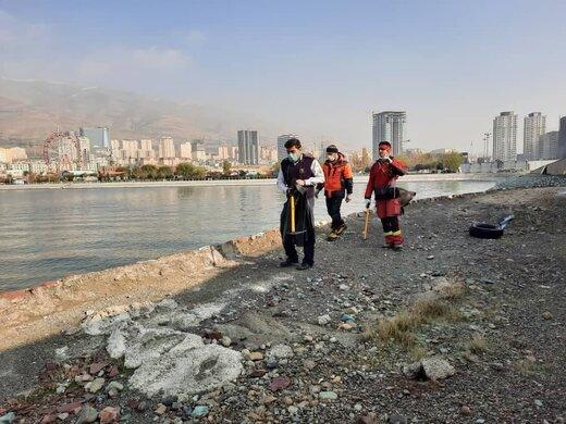 آخرین خبرها از تمساح دریاچه چیتگر/ تمساح تلف شده است؟