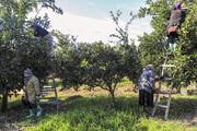 تصاویر   حال و روز کارگران فصلی در روزهای سرد پاییزی