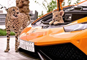 ببینید | جولان حیوانات وحشی در خانه بچه پولدارها