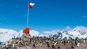 کرونا تا قطب جنوب هم رفت!