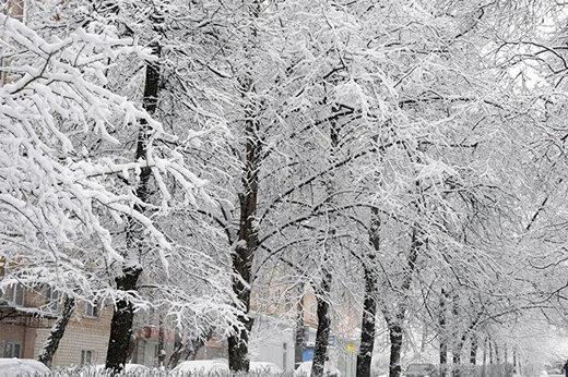 کاهش محسوس دما در بیشتر مناطق پایتخت/ در این مناطق برف میبارد