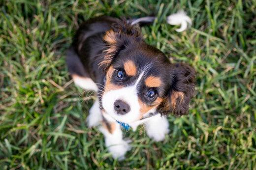 سگ گردانی در محل بازی کودکان در بوستانها ممنوع شد