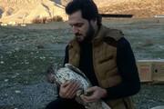 ببینید   زخمی شدن یک عقاب دو برادر توسط انسانها
