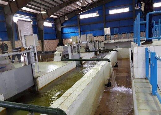 روش های غلط در تصفیه آب شهر سنندج انجام می شود/ سلامت مردم بازیچه سیاسی کاری مدیران شده است