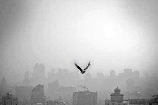 ببینید | حقایق تلخ درباره دلایل آلودگی هوای تهران با مازوت