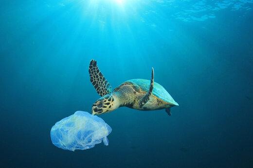 ببینید | جنایت پلاستیکی علیه لاکپشتهای دریایی