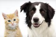ببینید | قلدربازی خندهدار گربه برای یک سگ