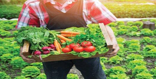 اهمیت استفاده از محصولات ارگانیک