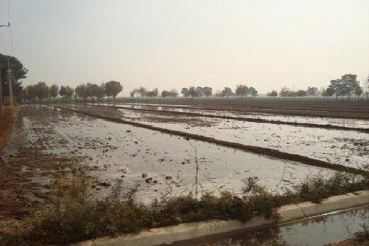 چالش مدیریت پساپ در اصفهان/از شیوع سالک تا ورود آلایندهها به زنجیره مواد غذایی!