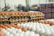 هر شانه تخم مرغ درب مرغداری چند