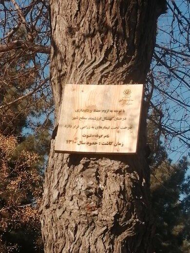 اقدام قابل توجه شهرداری مشهد برای حفظ درختان قدیمی شهر/ عکس