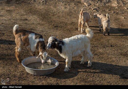 عشایر منطقه کریت کمپ اهواز