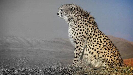 گزارش «گونههای ممنوعه حیات وحش» سایت دیوار چه اطلاعاتی به ما میدهد؟