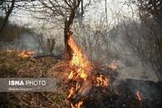 ببینید | حریق بزرگ در ۵ هکتار از اراضی جنگلی شهرستان نکا