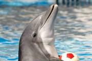 ببینید | انتقال تنها دلفین برج میلاد به کیش