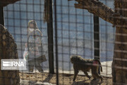 سرنوشت حیوانات در باغوحشهای ایران؛ مرگ/ چرا دستورالعملها بهروز نمیشوند؟