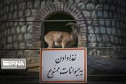 تصاویر   بازگشایی باغ وحش ارم تهران
