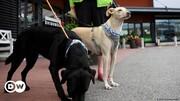 ببینید | استفاده از سگهای «کرونا یاب» در فنلاند