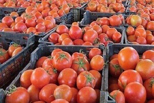بیماری پوسیدگی میوههای گوجهفرنگی در برخی گلخانهها دیده شد