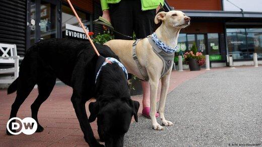ببینید   استفاده از سگهای «کرونا یاب» در فنلاند