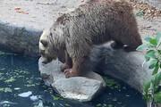 ببینید | تصاویر باورنکردنی و عجیب از نجات یک کلاغ توسط خرس!