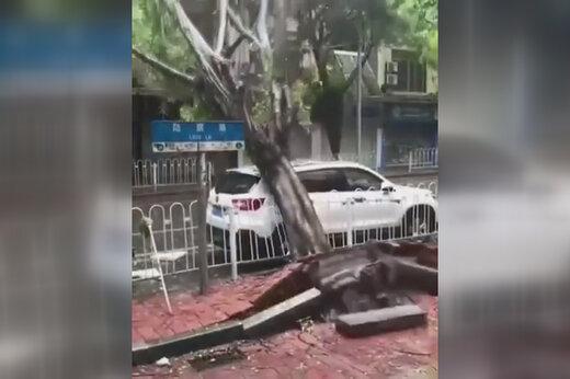 ببینید | له شدن خودروی میلیاردی زیر درخت وسط خیابان