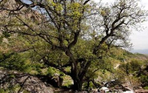 چهار اثر طبیعی قزوین واجد ارزش ثبت ملی شناخته شد