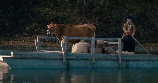 «نخستین گاو» را ببینید