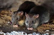 ببینید |  رژه موشها در بوفه فرودگاه پیشرفته و لاکچری پاریس