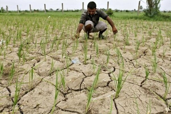 لغو ممنوعیت کشت برنج بحران آبی ایران را تشدید میکند