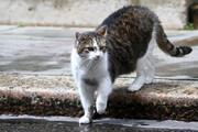 ببیند| گربهای که در کمال ناباوری عاشق کتک خوردن است!