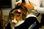 ببینید | گربهای با علایق بسیار عجیب که دنیا را شگفتزده کرده