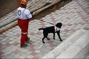 تصاویر | تمرین سگهای جستجو و نجات هلال احمر اصفهان
