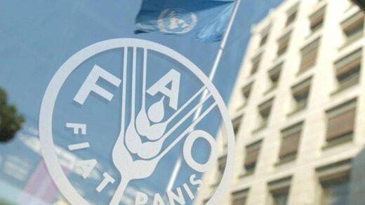 فائو : افزایش 4.3درصدی قیمت مواد غذایی در جهان