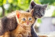 ببینید | لحظه جالب و خندهدار نجات گربه از یک دعوا توسط سگی مهربان