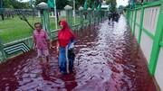 ببینید   جاری شدن سیل سرخ و خونینرنگ در اندونزی