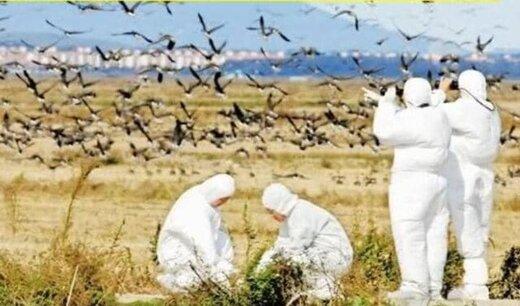 خودداری از نزدیک شدن به پرندگان وحشی به دلیل احتمال شیوع آنفلوآنزای پرندگان