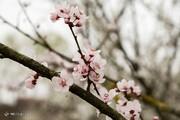 تصاویر | در رشت بهار شد