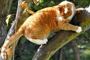 ببینید | پرواز بلند و حیرتانگیز گربه برای رسیدن به آغوش صاحبش