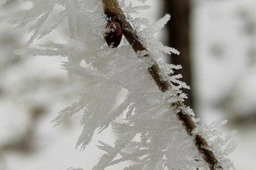 ببینید | تصاویری حیرتانگیز از یخ زدن درختان در آمریکا