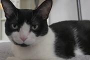 ببینید | مراقبت ویژه و خندهدار یک گربه از عروسکی با شمایل بچهگربه