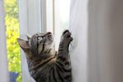 ببینید | مهارتهای خیرهکننده یک گربه در بالا رفتن از دیوار صاف