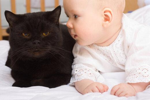 ببینید | حمله شجاعانه اما اشتباه یک گربه به سگ برای دفاع از کودک